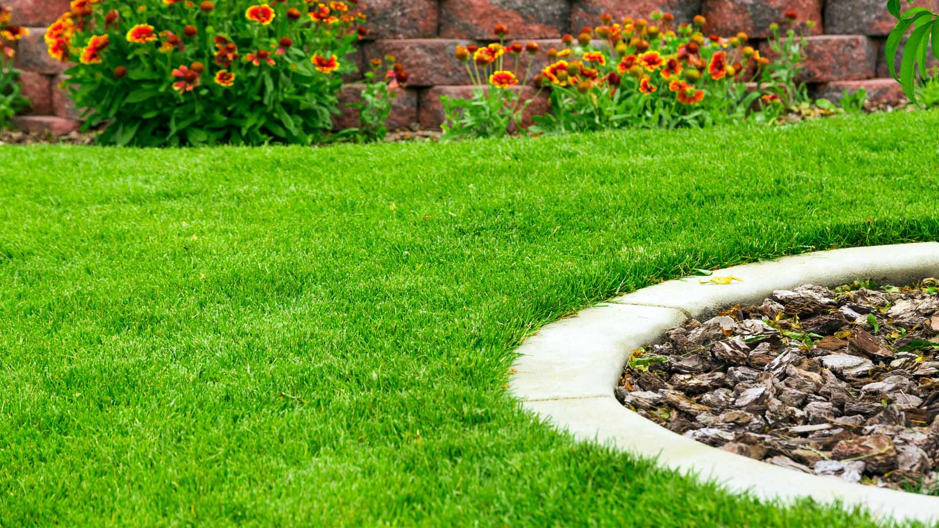 Thick green yard with lawn fertilization treatment.